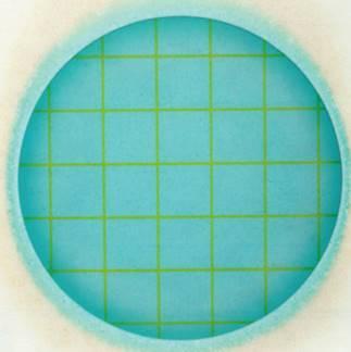 Гетероферментативные молочные бактерии